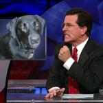 the.colbert.report.10.07.09.Alison Gopnik_20091020015125.jpg